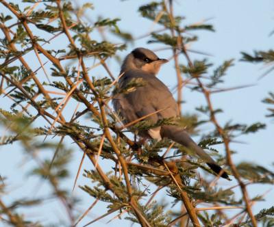 Birding in Great Rann of Kutch