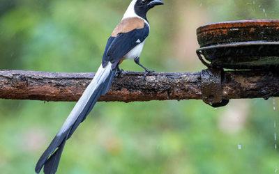Western Ghats Birding